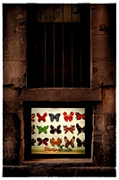 Butterfly Shoes - available for purchase on fine art archival photo paper